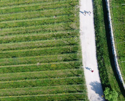Riprese aeree con drone per DiViNosiola 2018 2