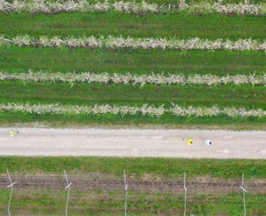 Riprese con drone per DiviNosiola 2019